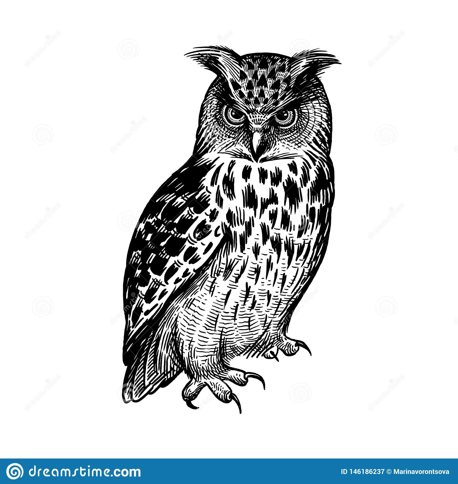 Owl predatory forest bird sketch hand drawing black and