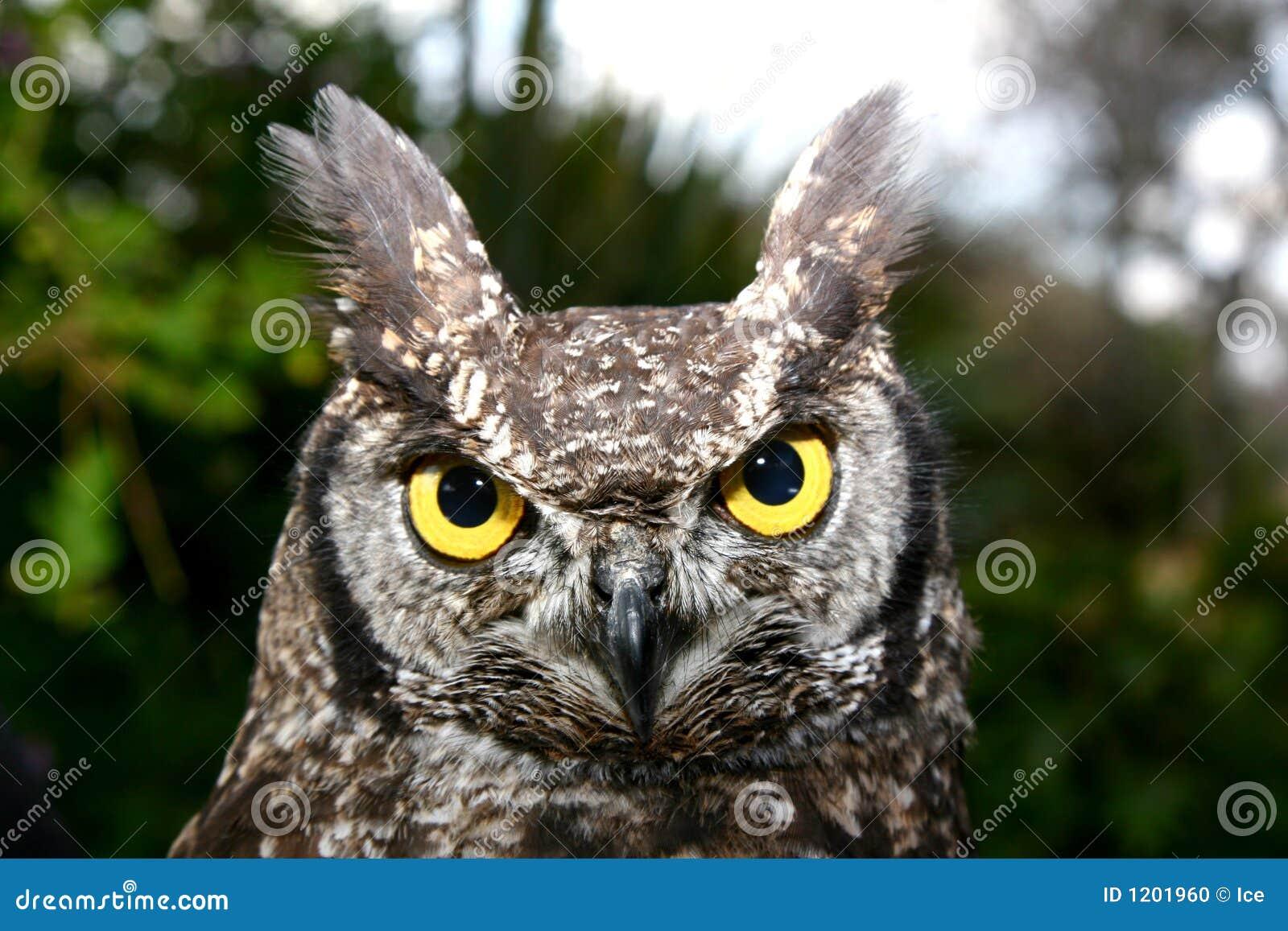 Owl Stair