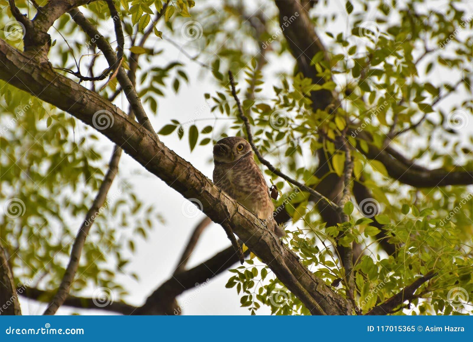 Owlet repéré