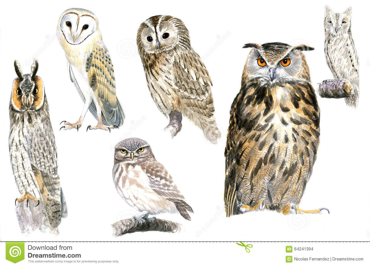 Owls Stock Illustration Image 64241394