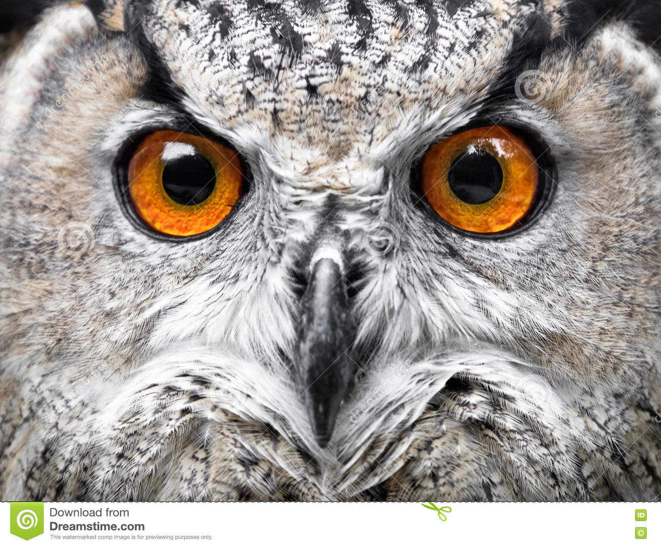 Owls Portrait. owl eye...