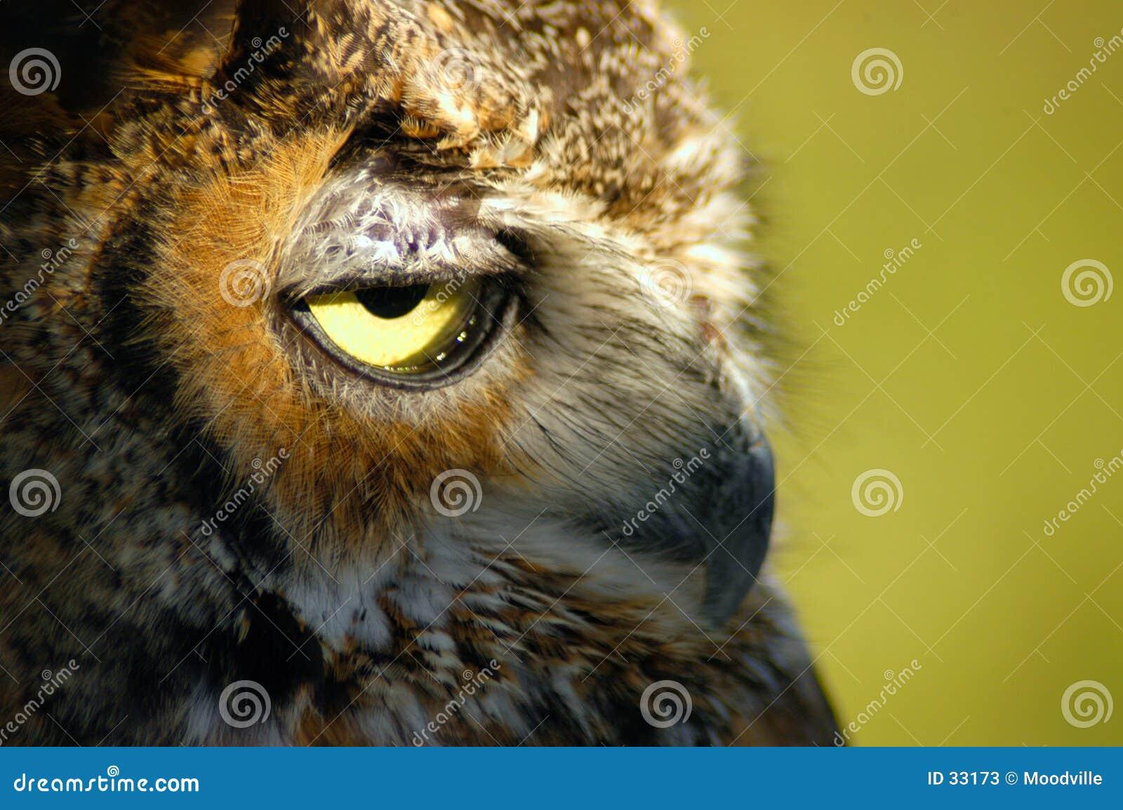 Owlstående