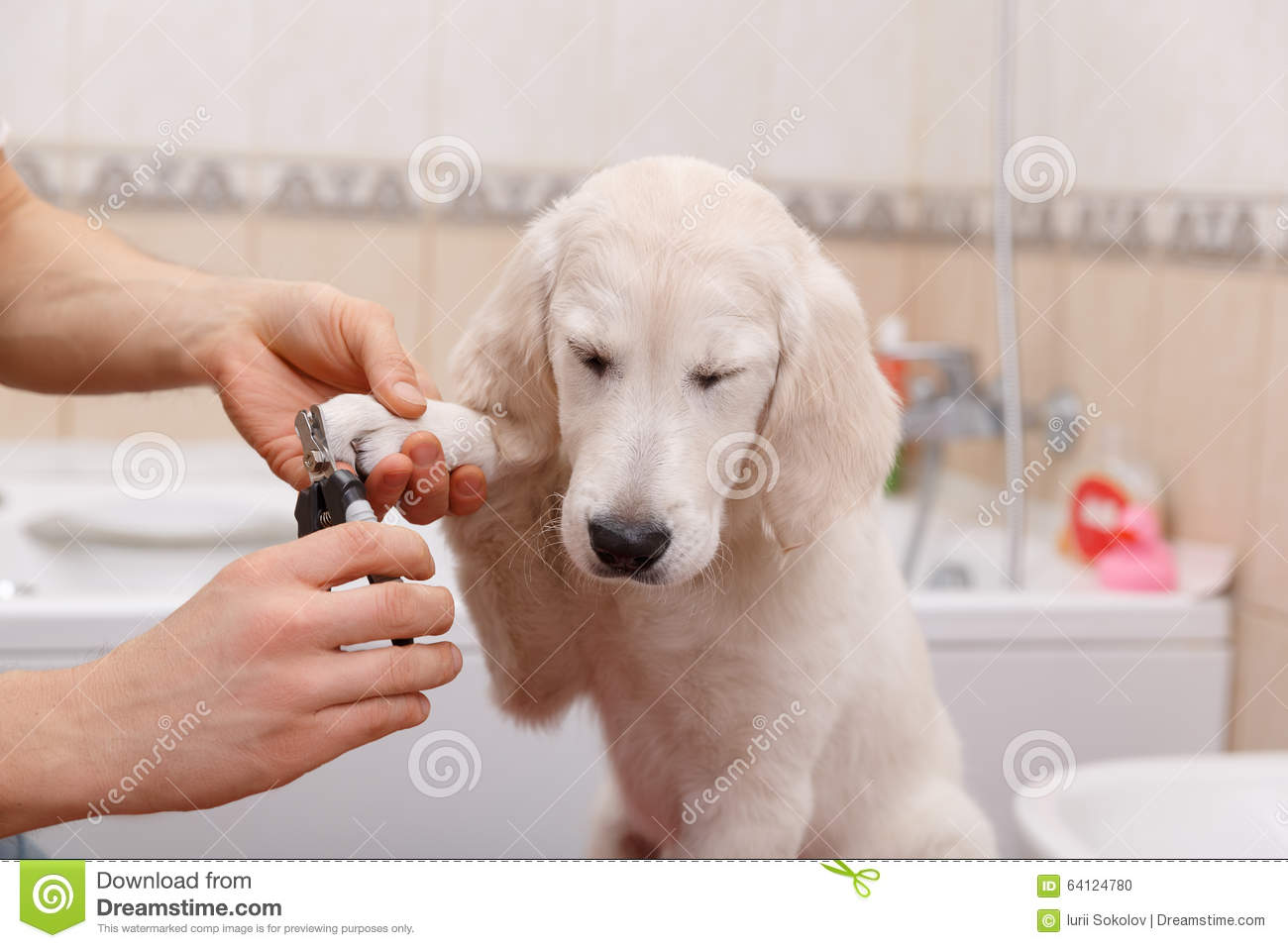Owner Grooming His Dog At Home Stock Photo Image Of Clean Hygiene