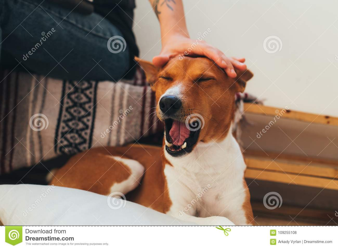 Owner Pets Cute Dog, Which Yawns Stock Photo - Image of ...