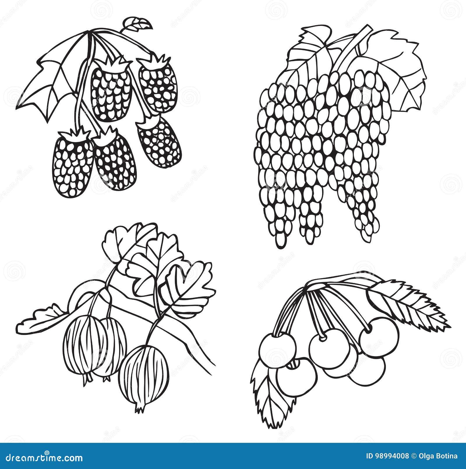 Owoc, jagoda agrest i winogrona i