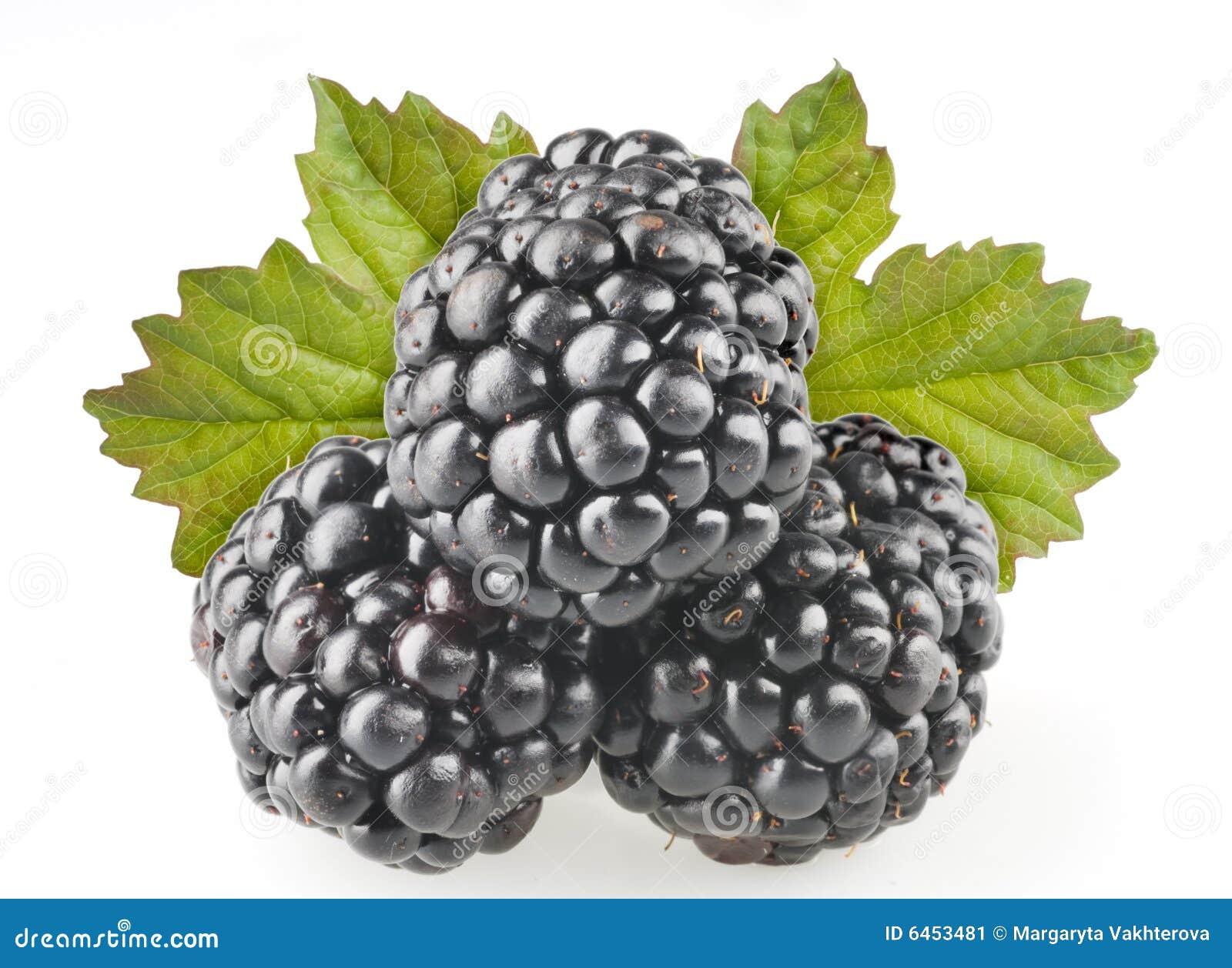 Owoce jeżynowa wyizolowana przedmioty
