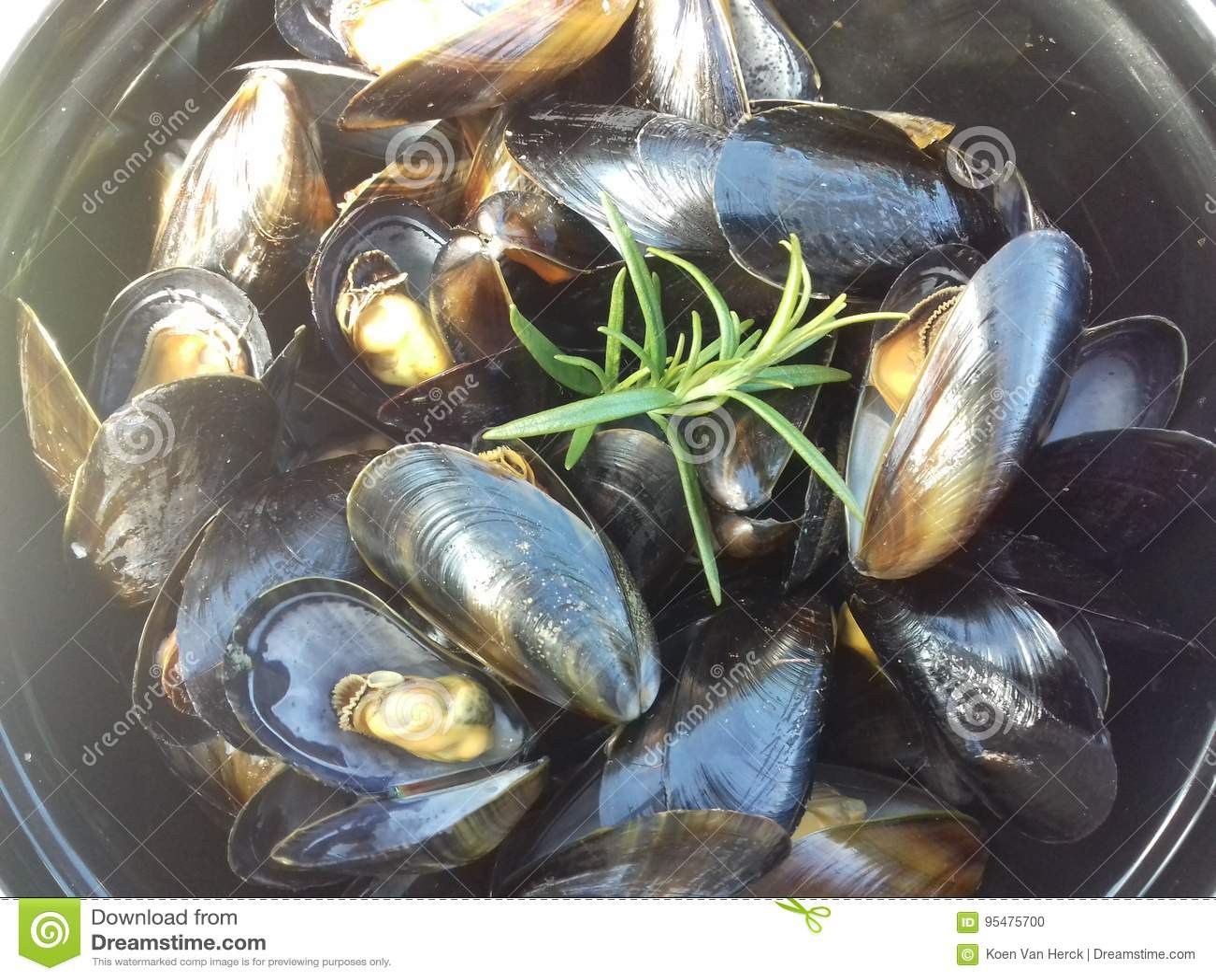 Owoce morza mussel przygotowywający jeść