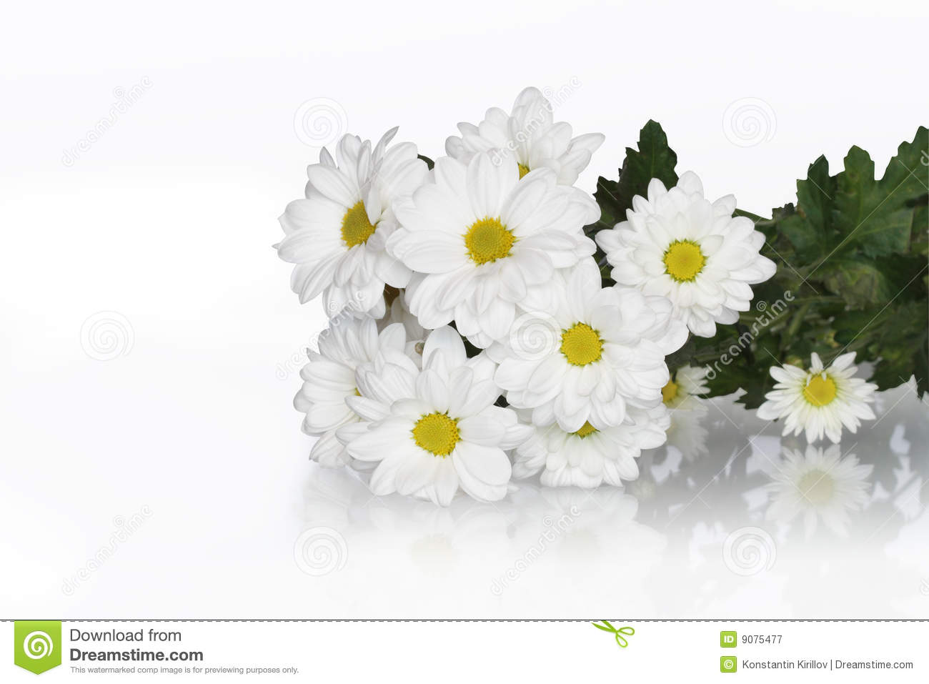 Bunch of ox eye daisy isolated on white background with clipping path