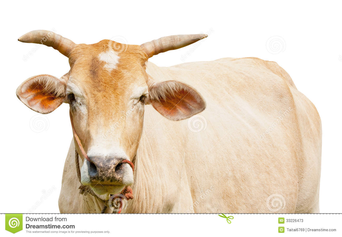 ox isolated stock photos image 33226473 clipart coats clip art goat pictures
