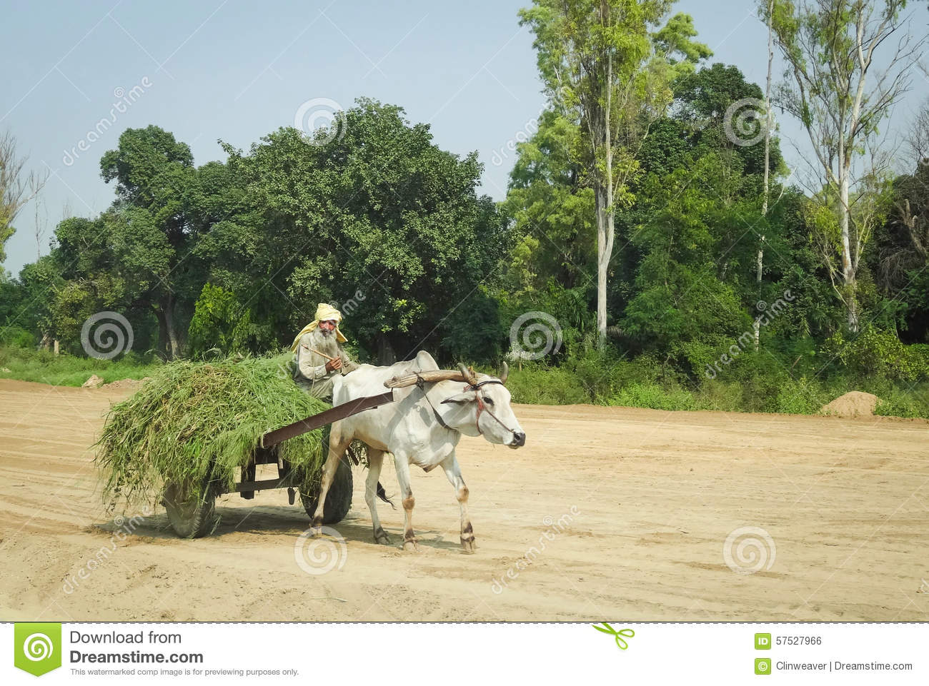 Oxcart i Indien