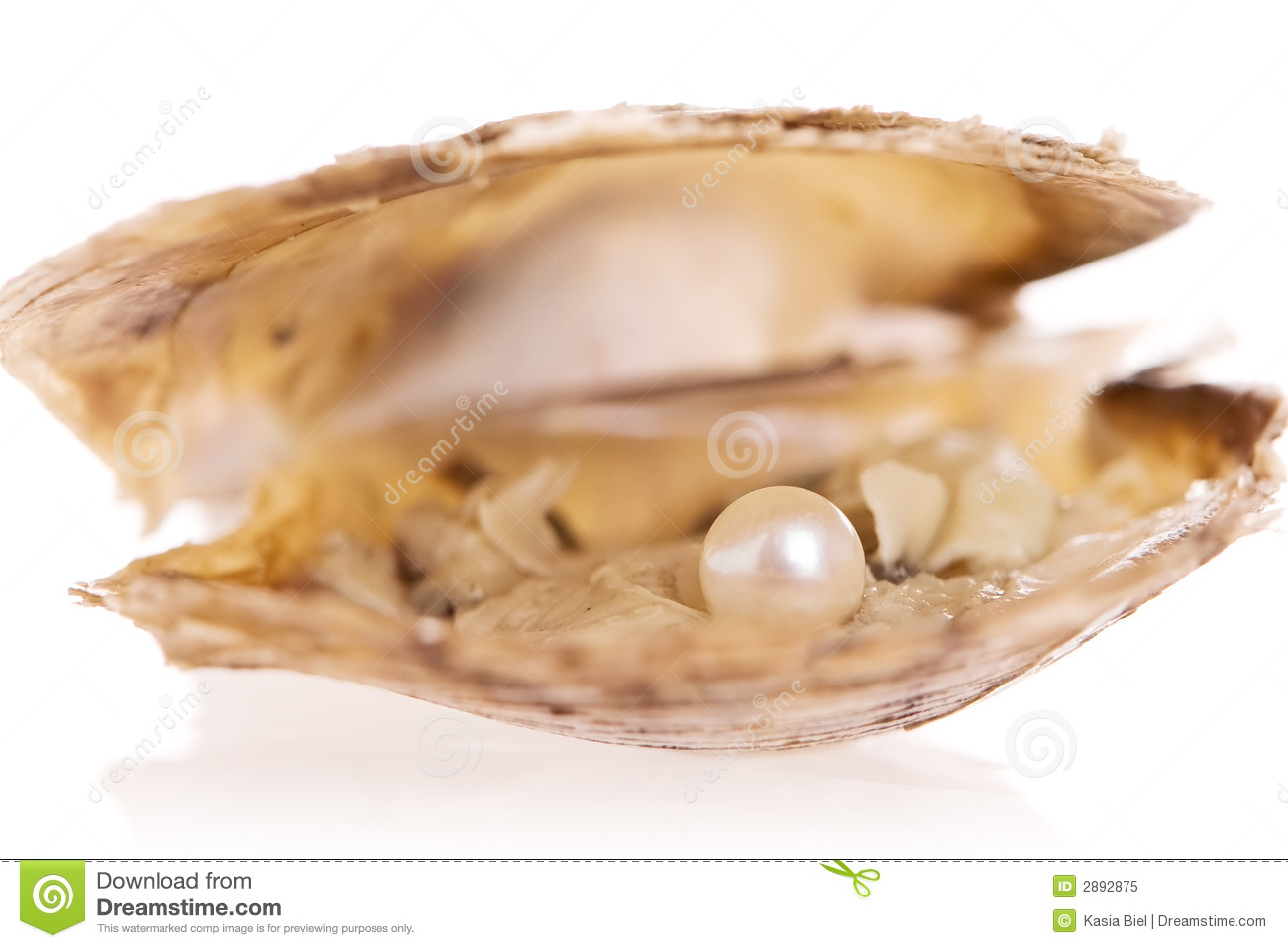 Oyster Pearl Royalty Free Stock Photo - Image: 2892875 Open Oyster Shell With Pearl