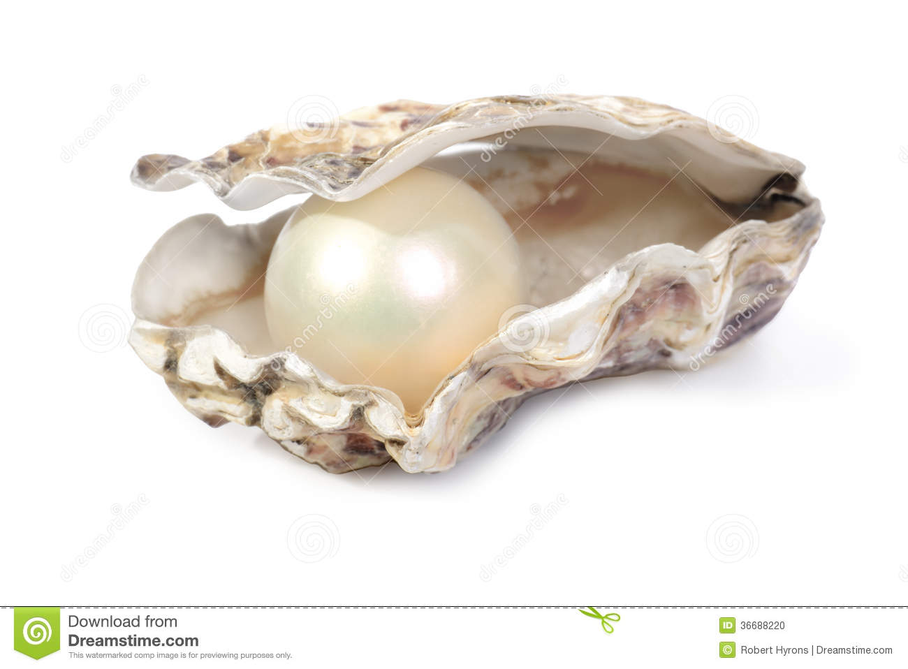Oyster and pearl stock photo image 36688220 for Interieur huitre