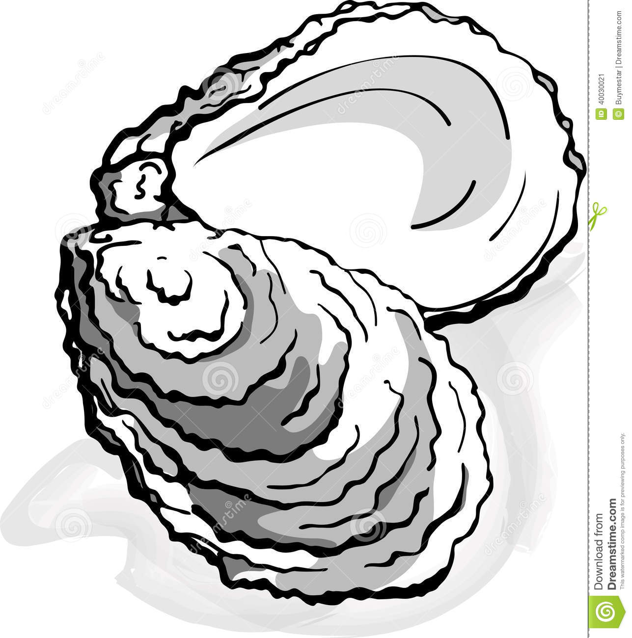Oyster Seafood Shell Single Isolated Element ...