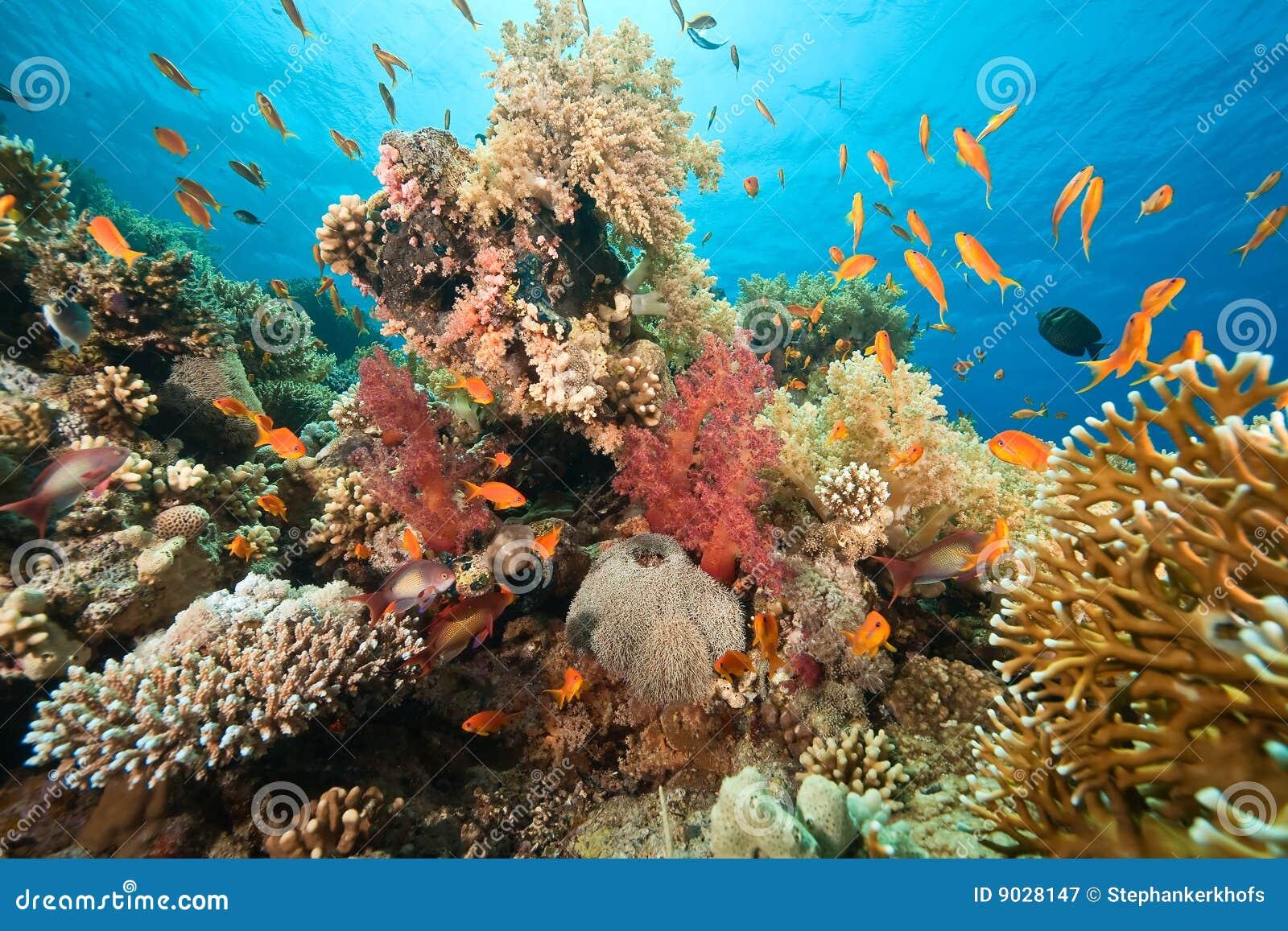 Ozean, Koralle und Fische