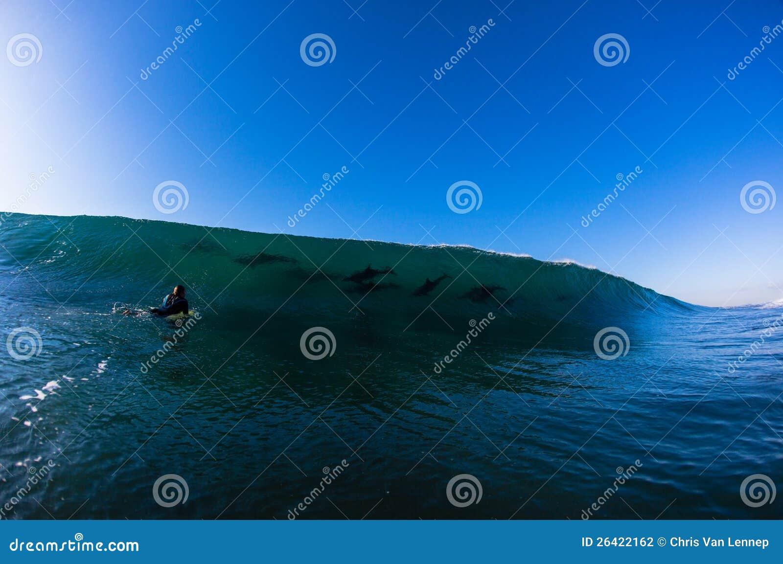 Ozean-Wellen-Delphin-Surfer
