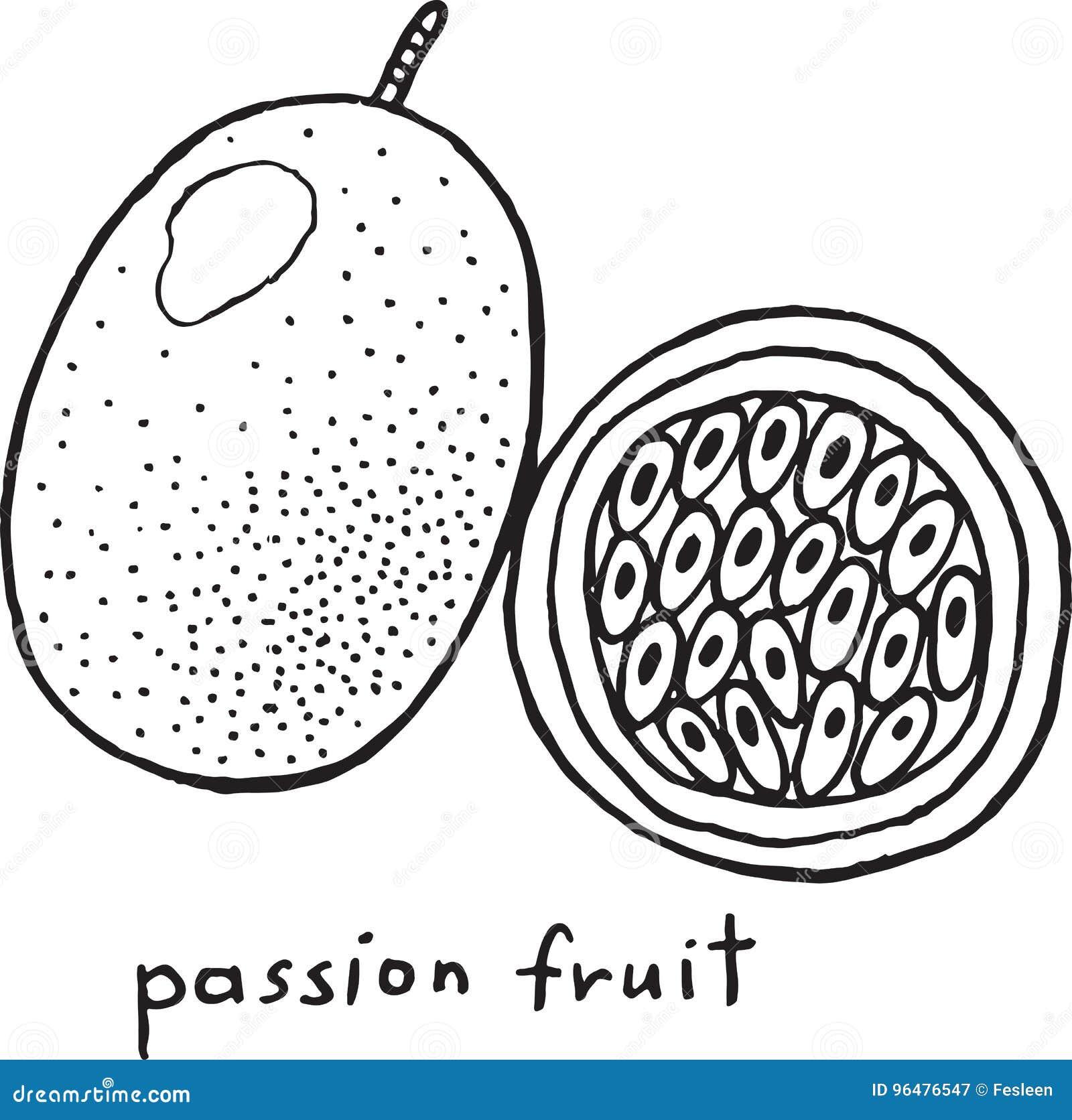Página del colorante de la fruta de la pasión Arte blanco y negro del vector gráfico