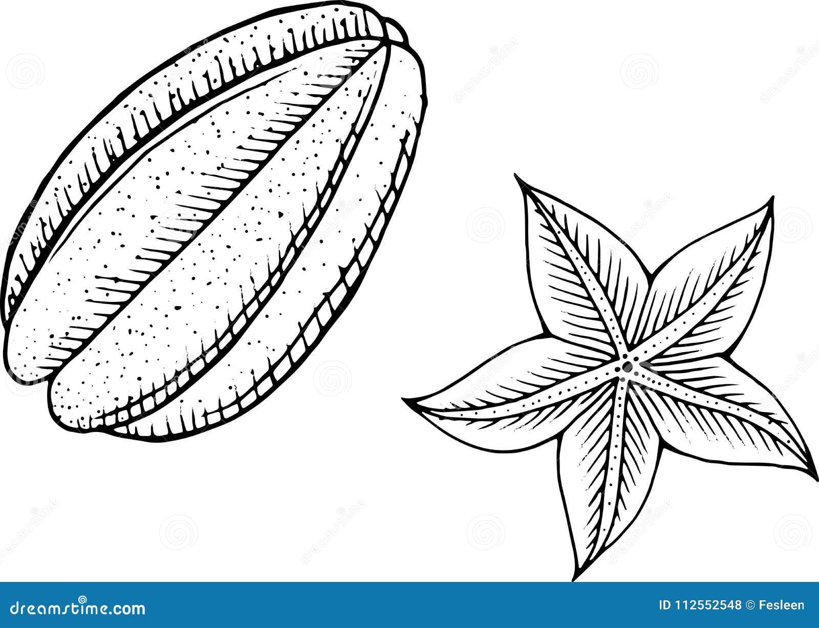 Página Del Colorante De Starfruit Línea Arte Para Los Libros