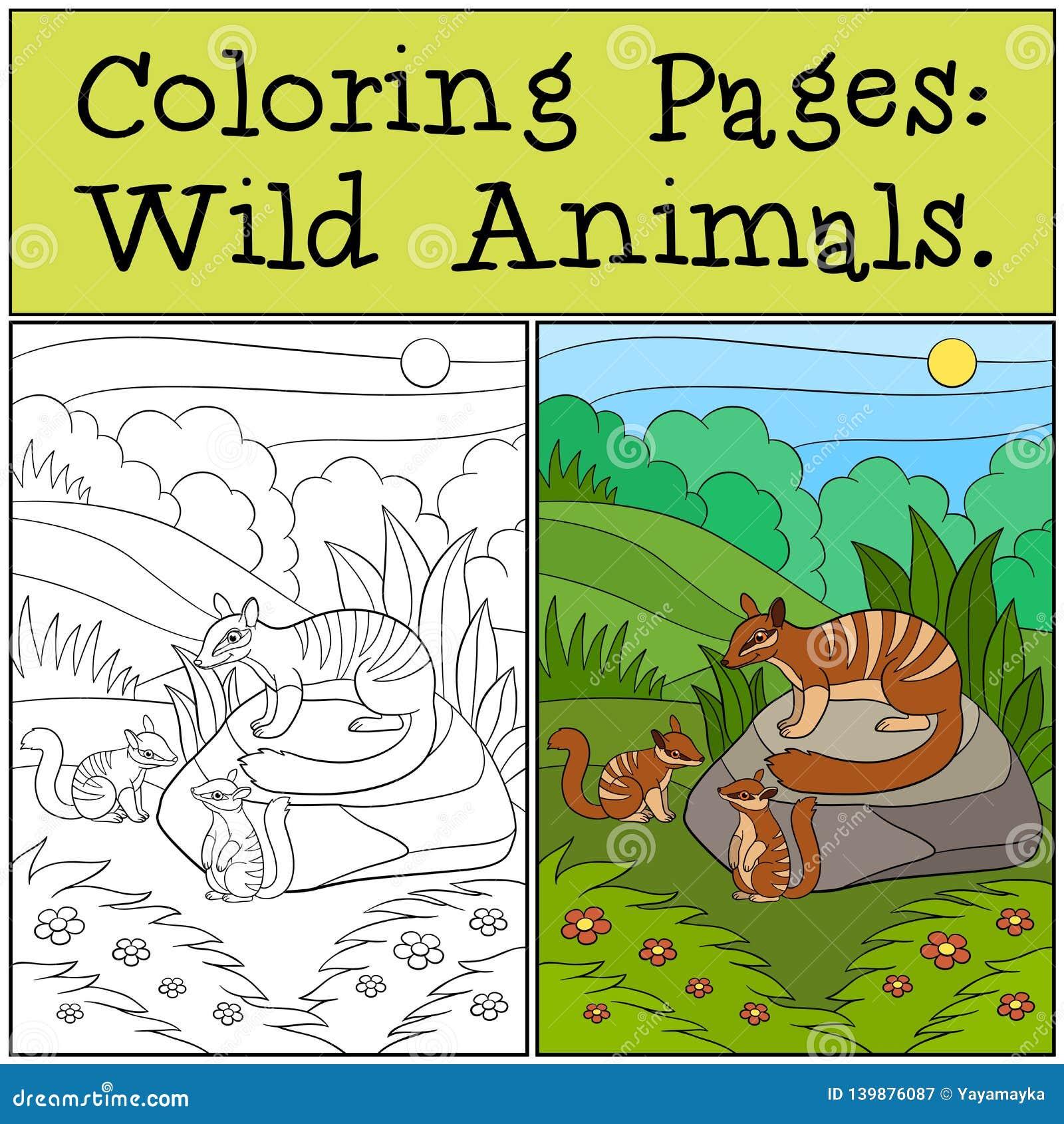 Páginas del colorante: Animales salvajes Numbat de la madre con sus bebés