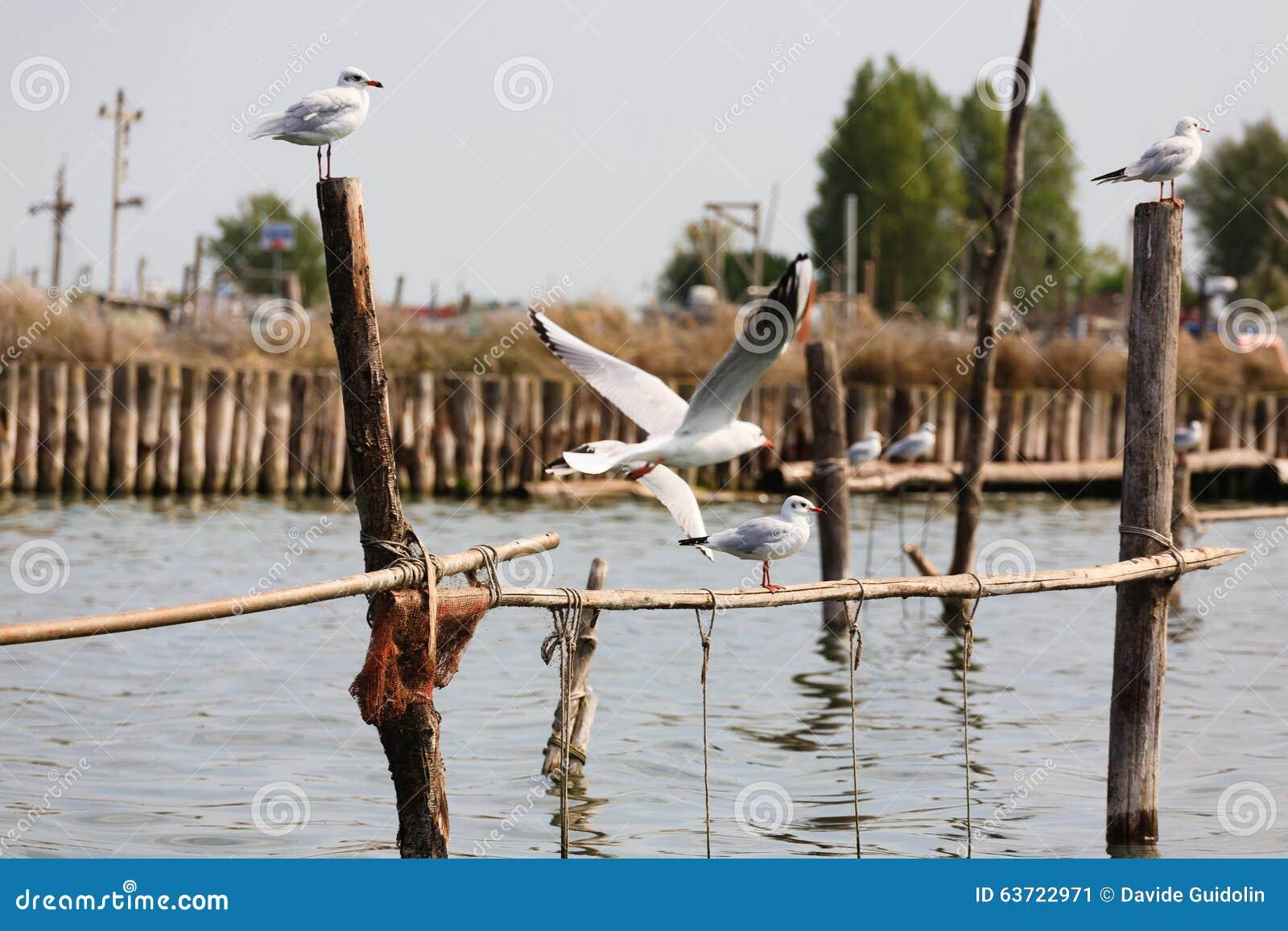 Pájaro de la laguna del río Po