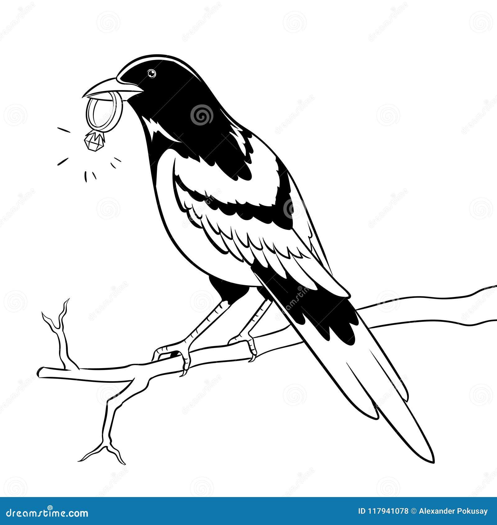 Pájaro De La Urraca Con Vector De Oro Del Colorante Del Anillo ...