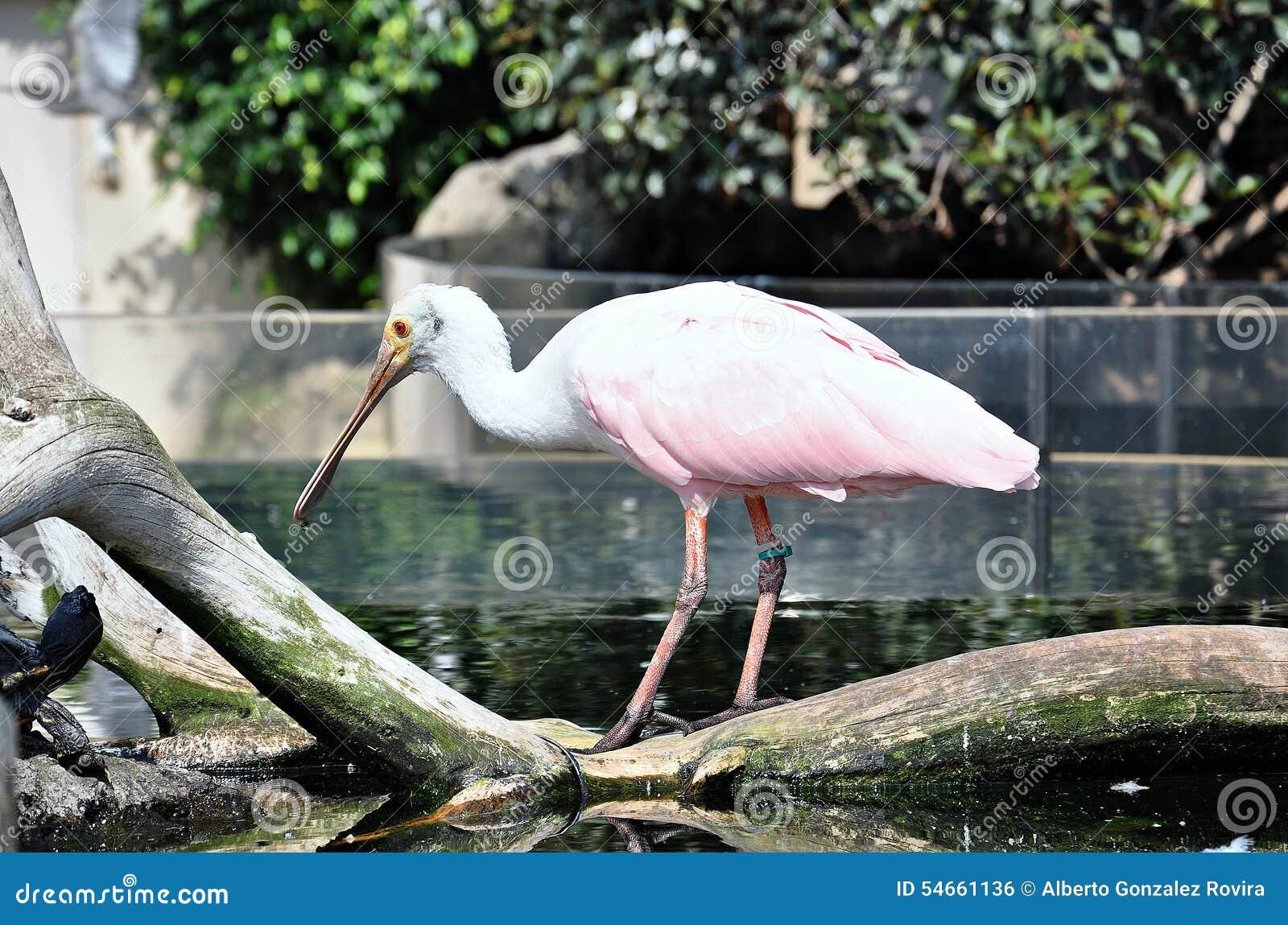 Pájaro de los humedales