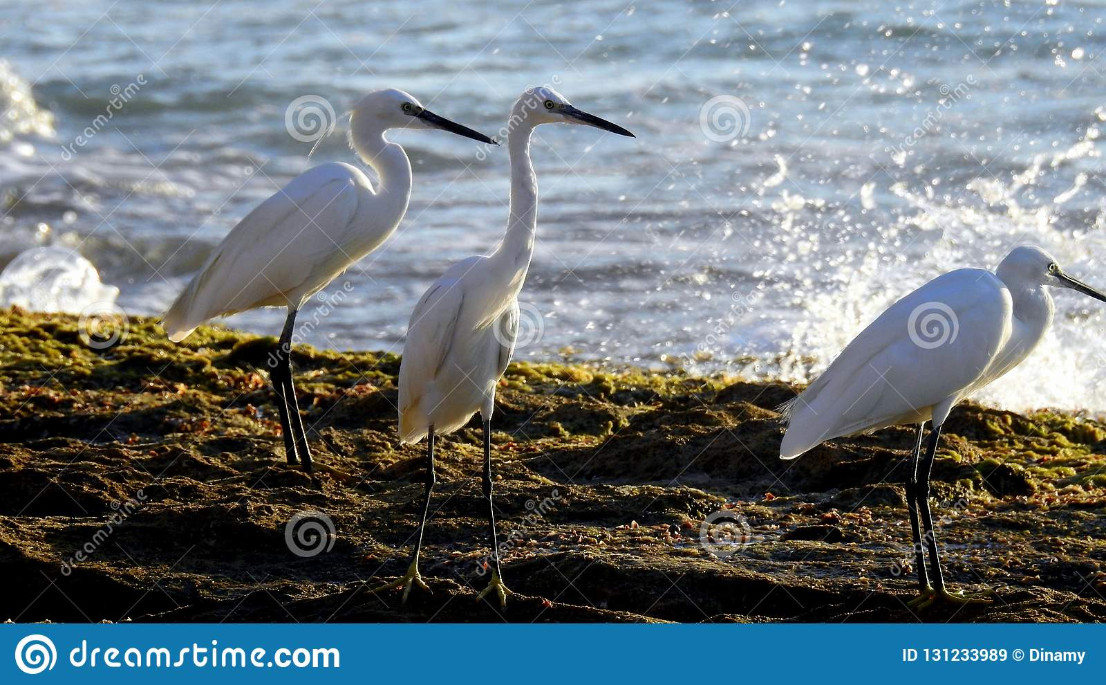 Pájaro de mar en verano