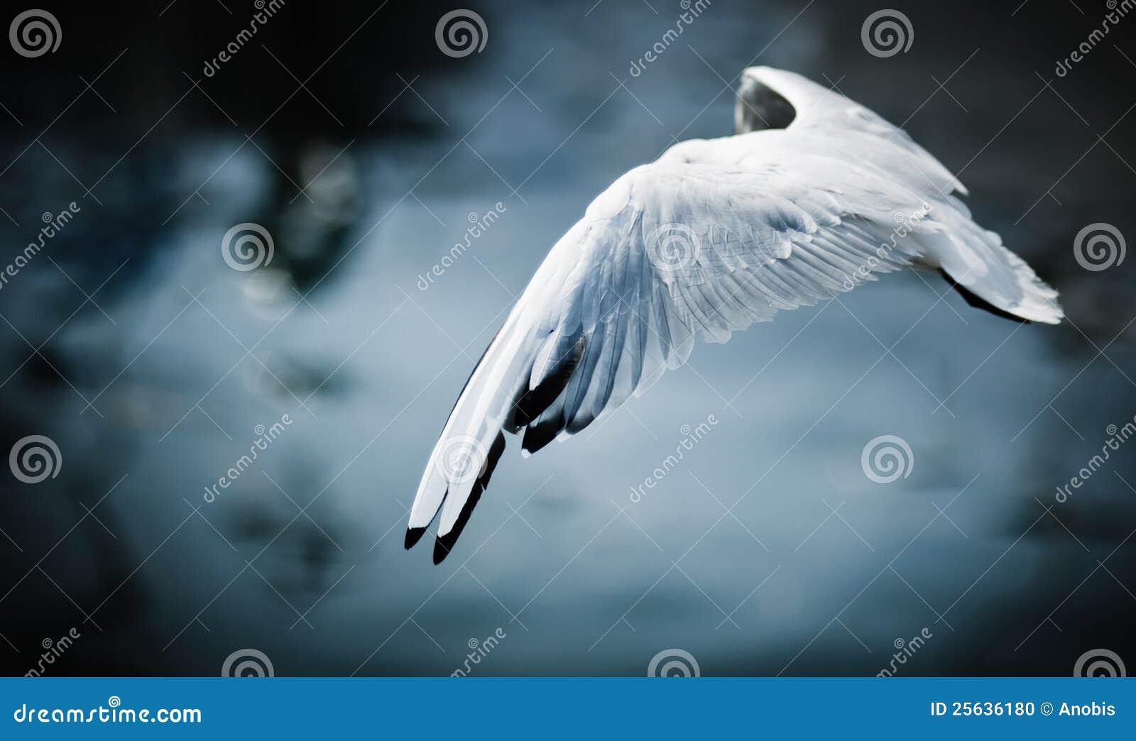 Pájaro de vuelo