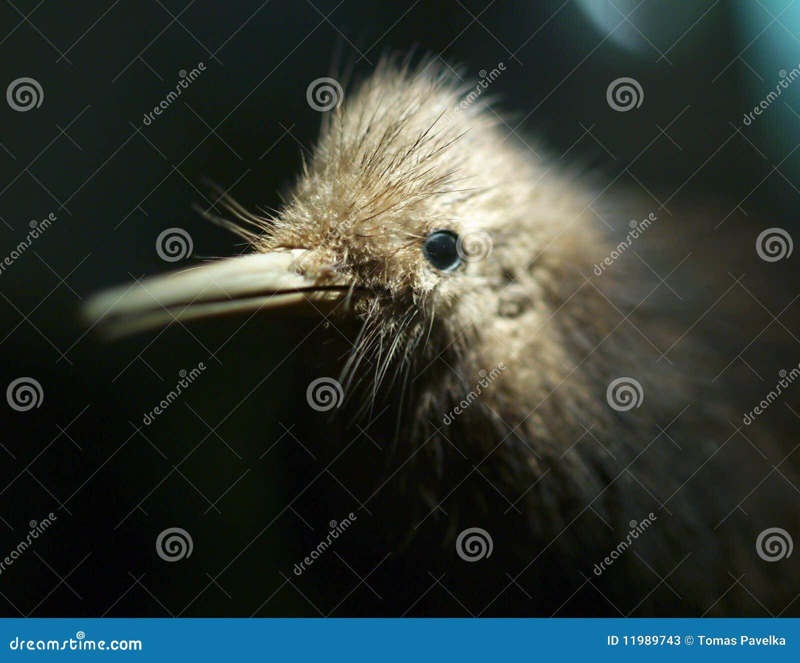 Pájaro del kiwi