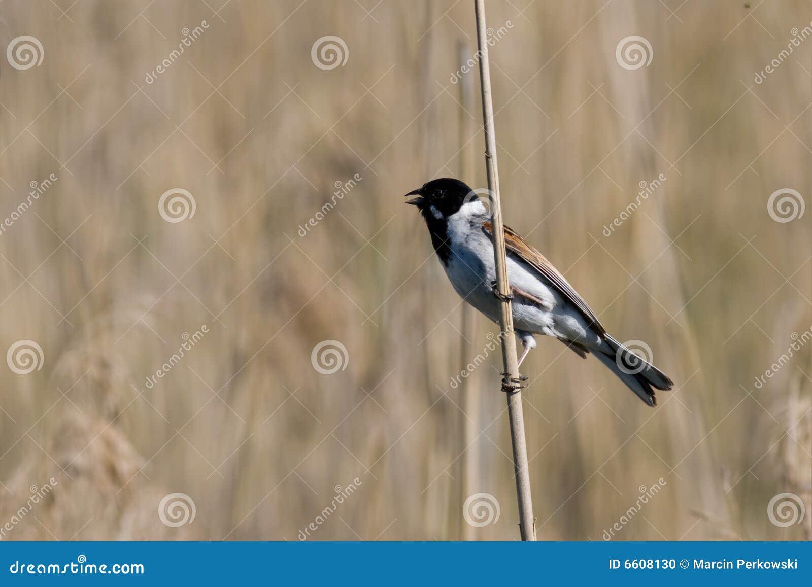 Pájaro - empavesado de lámina
