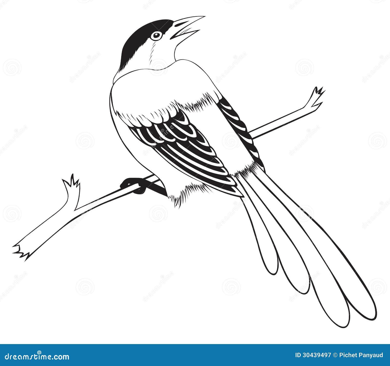 Pájaro En El Fondo Blanco Para Colorear Stock de ilustración ...