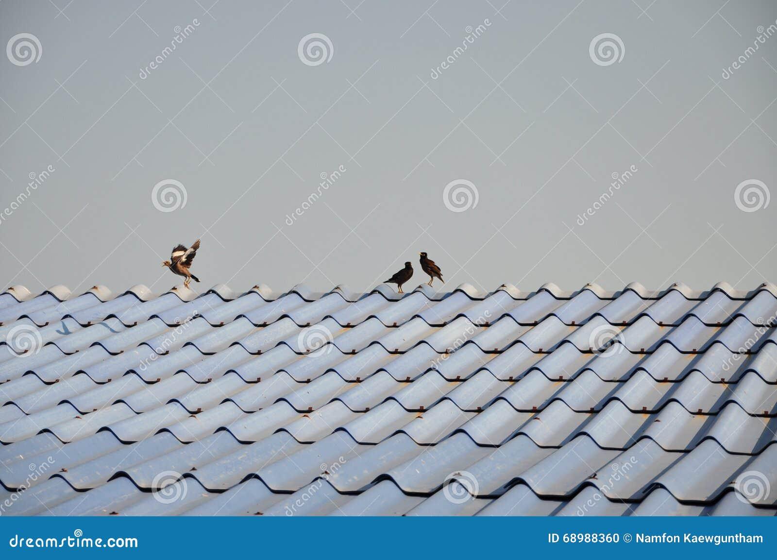 Pájaro en el tejado