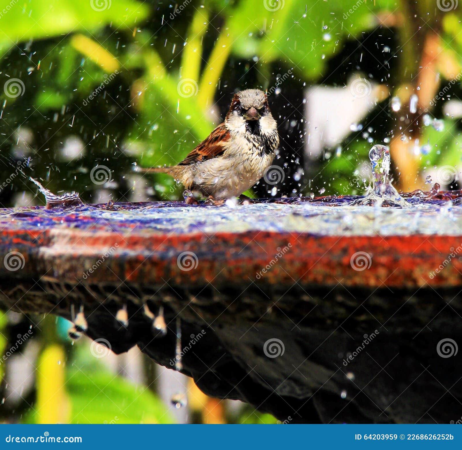 Pájaro en Jackson Square Fountain