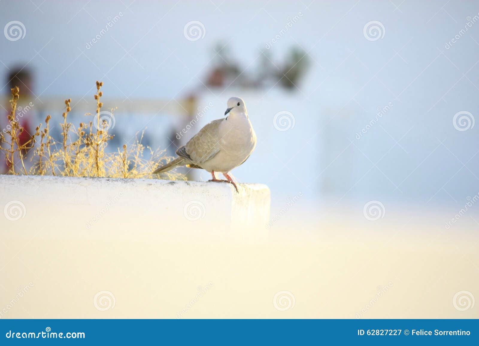 Pájaro en la luz