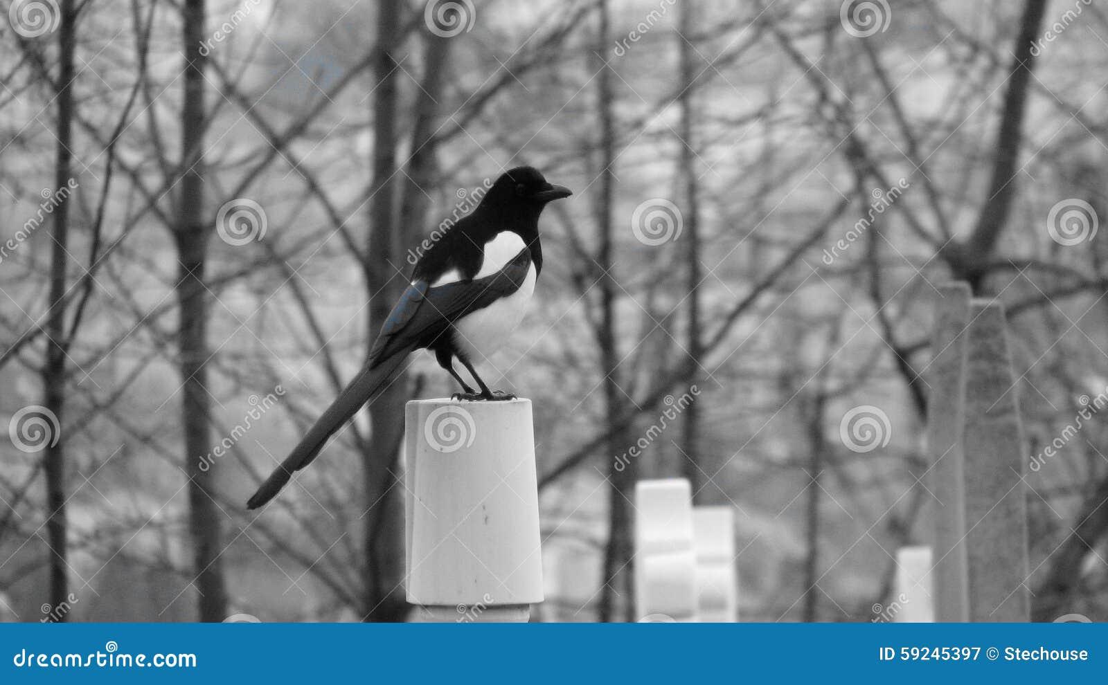 Download Pájaro En Rama En Odessa, Ucrania Imagen de archivo - Imagen de fuerte, cuatro: 59245397