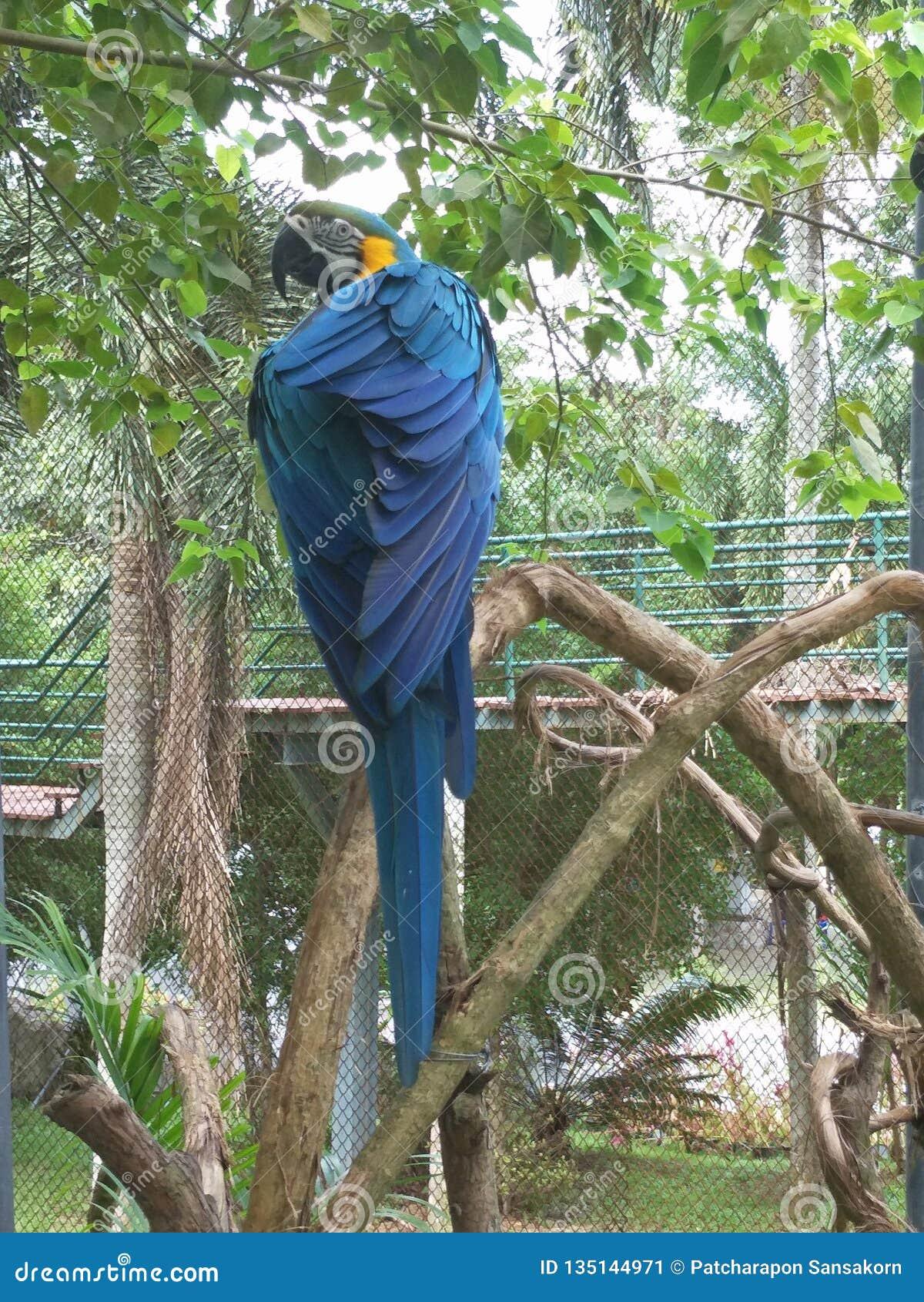 Pájaro en un parque zoológico