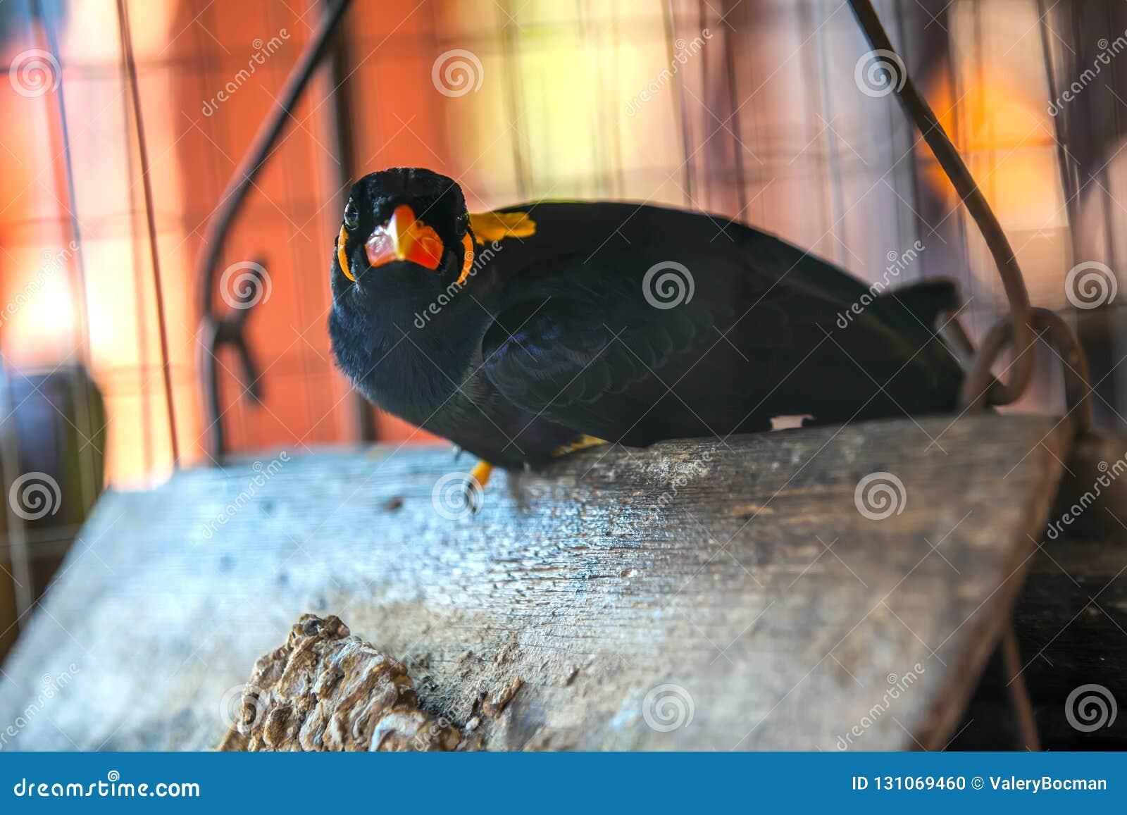 Pájaro hermoso en una jaula, Tailandia