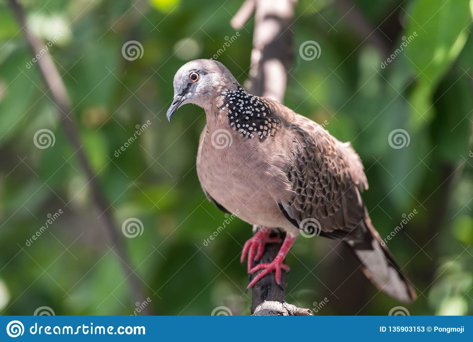 Pájaro (paloma, paloma o desambiguación) en una naturaleza