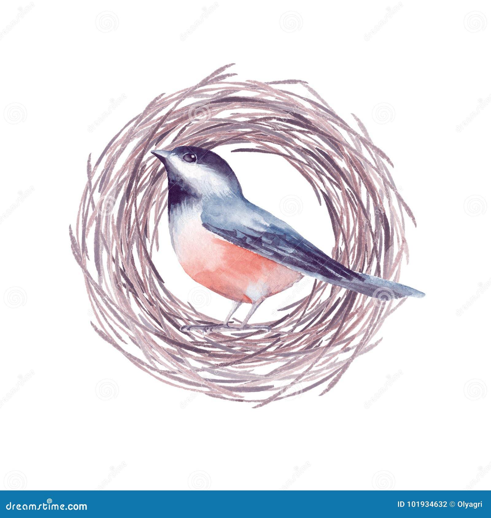 Pájaro y jerarquía 2