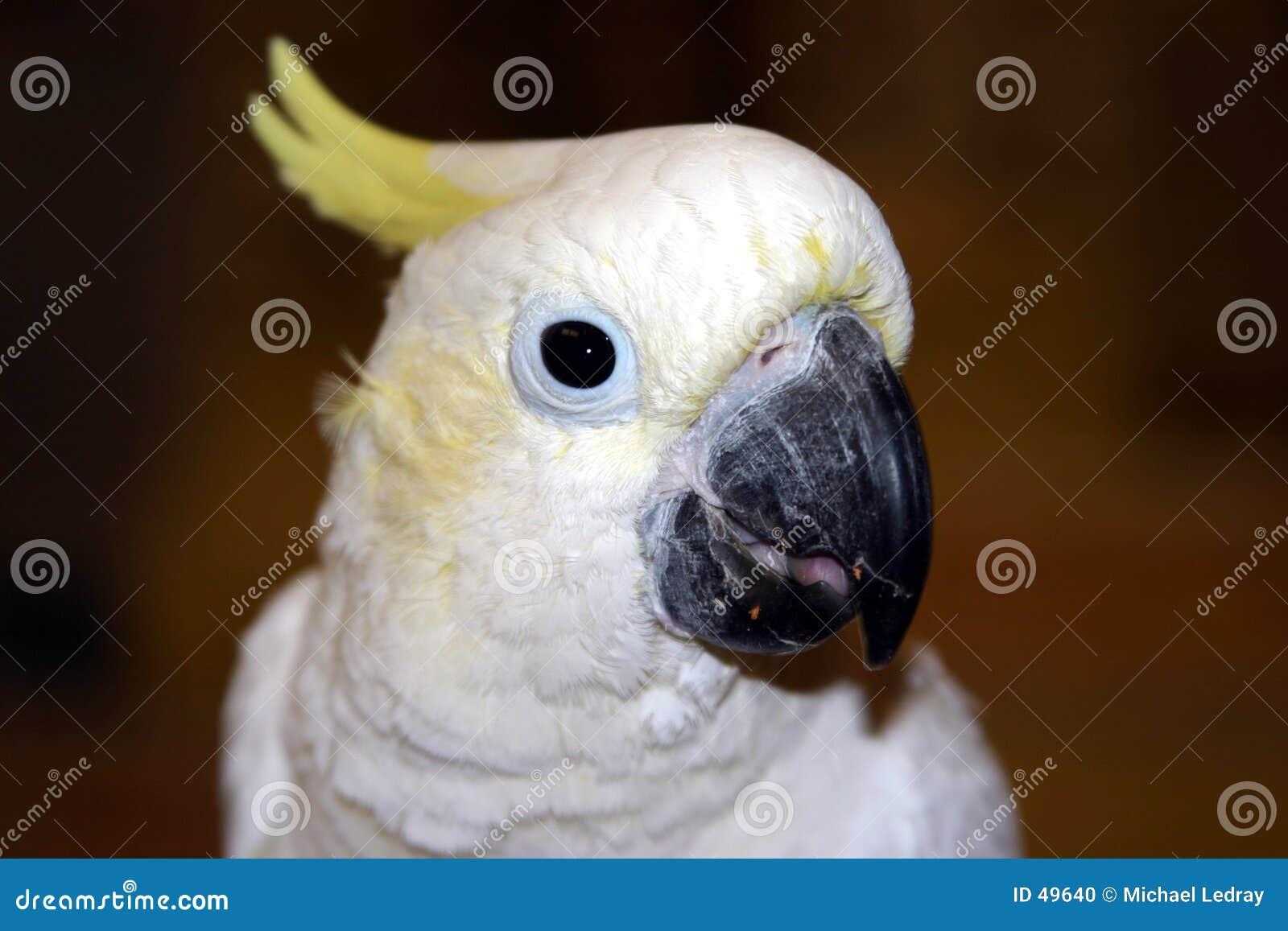 Pájaros #5
