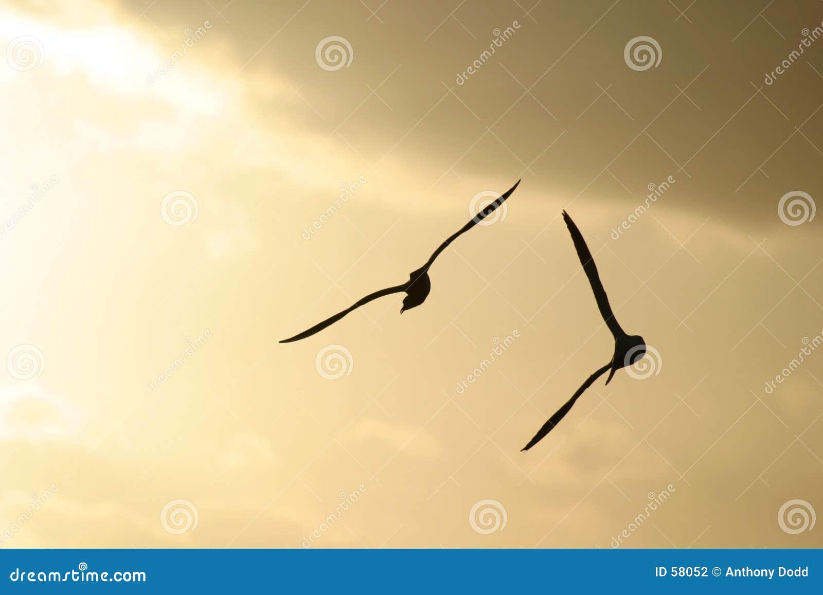 Pájaros de mar