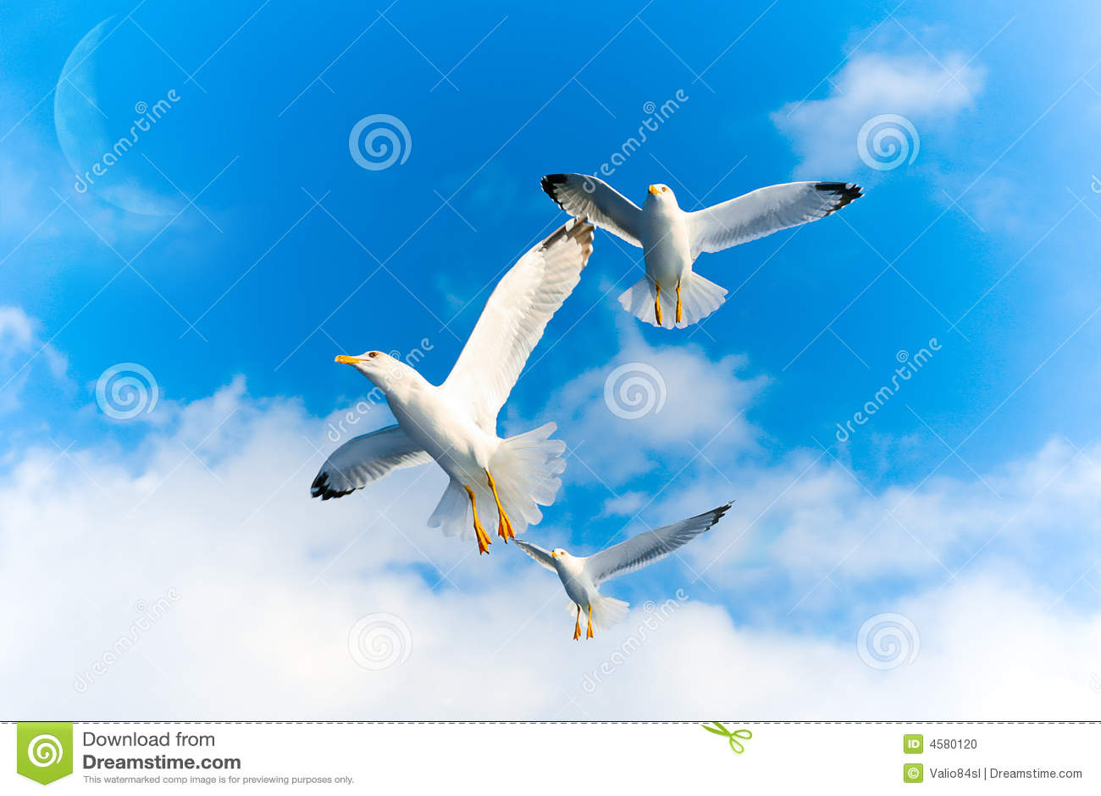 Pájaros de vuelo