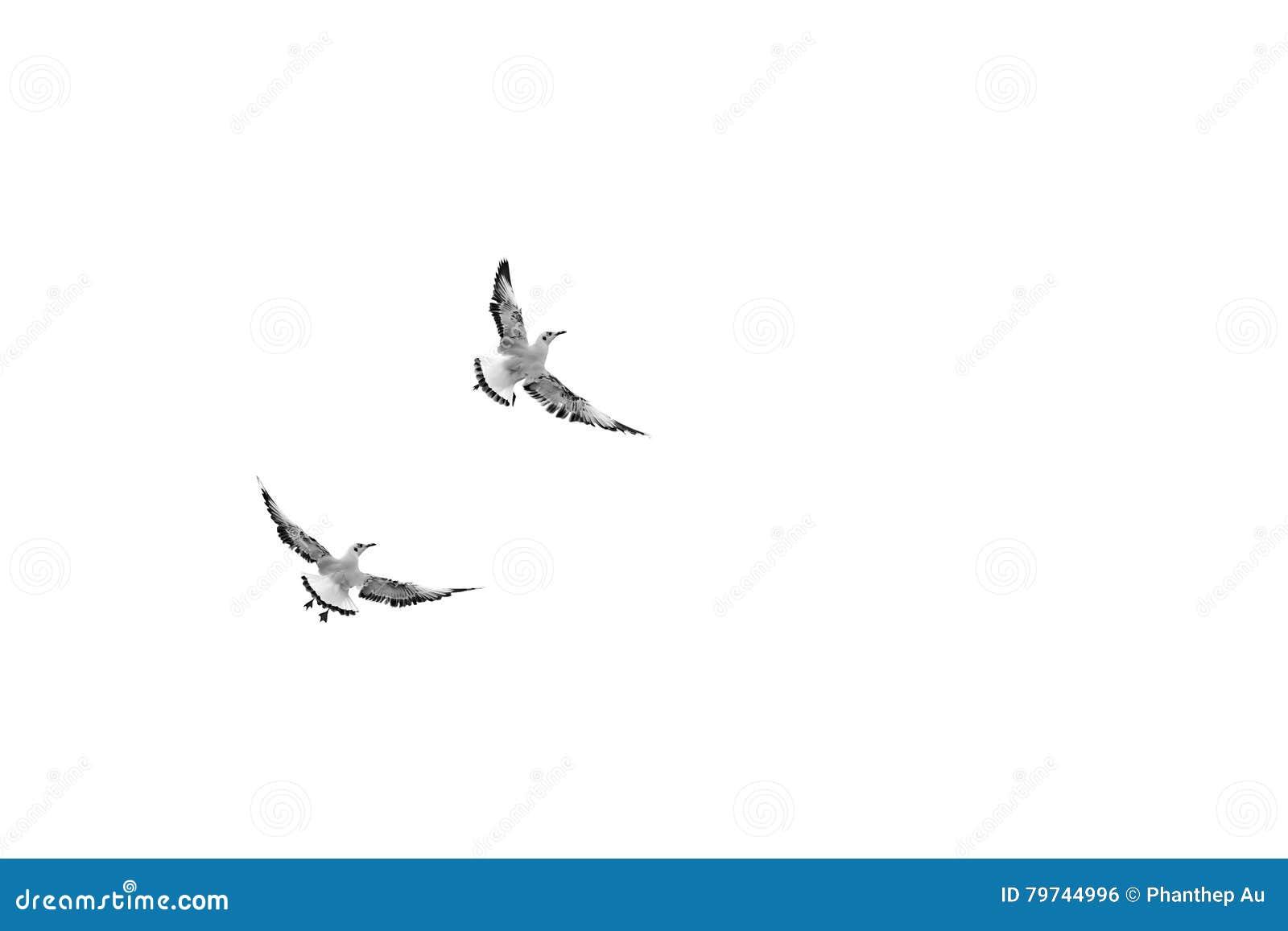 Pájaros de vuelo inusuales, pájaros de mirada divertidos