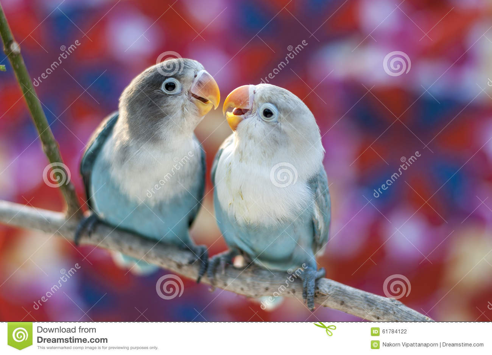 Pájaros del amor y un árbol