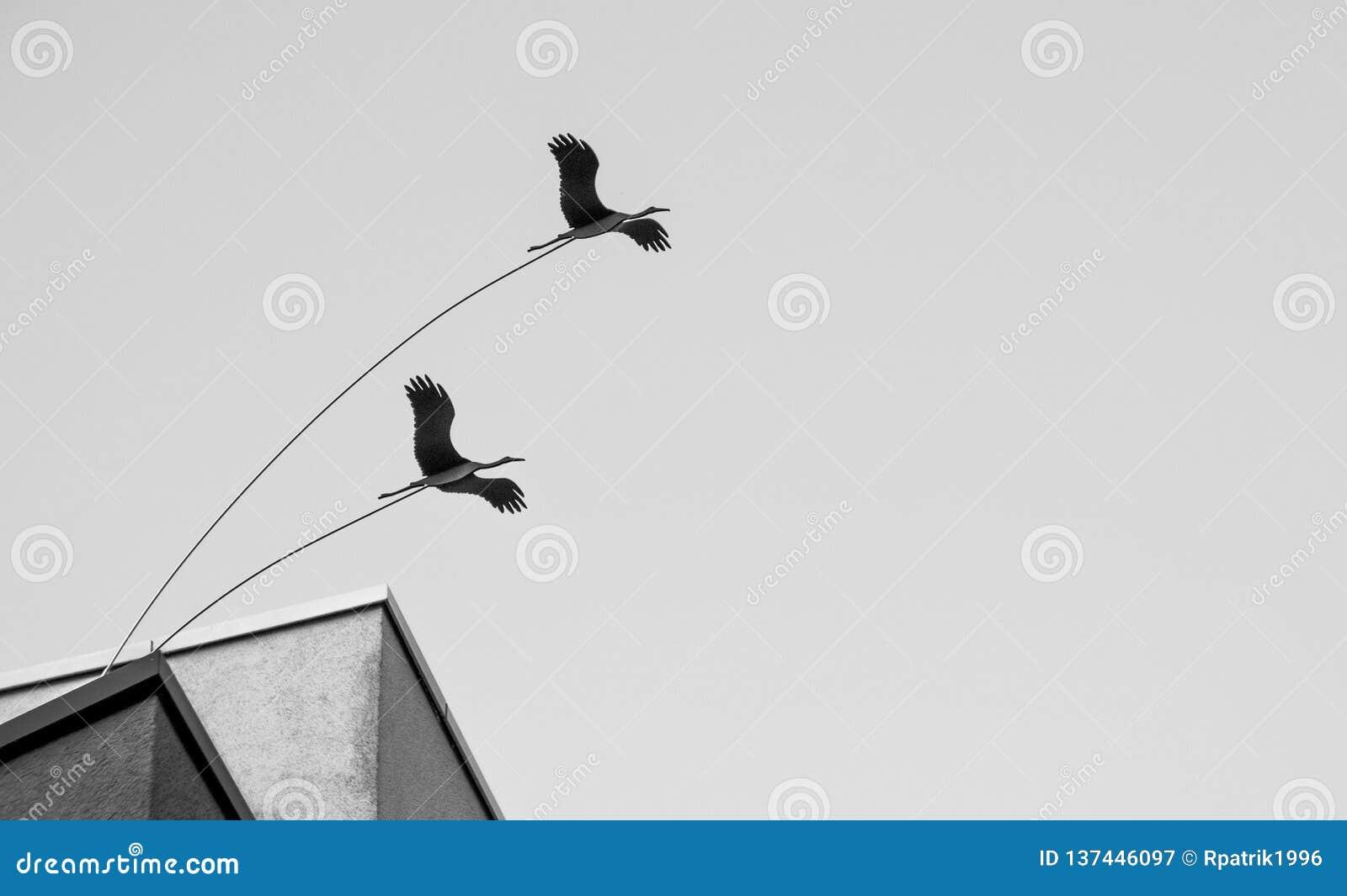 Pájaros del límite