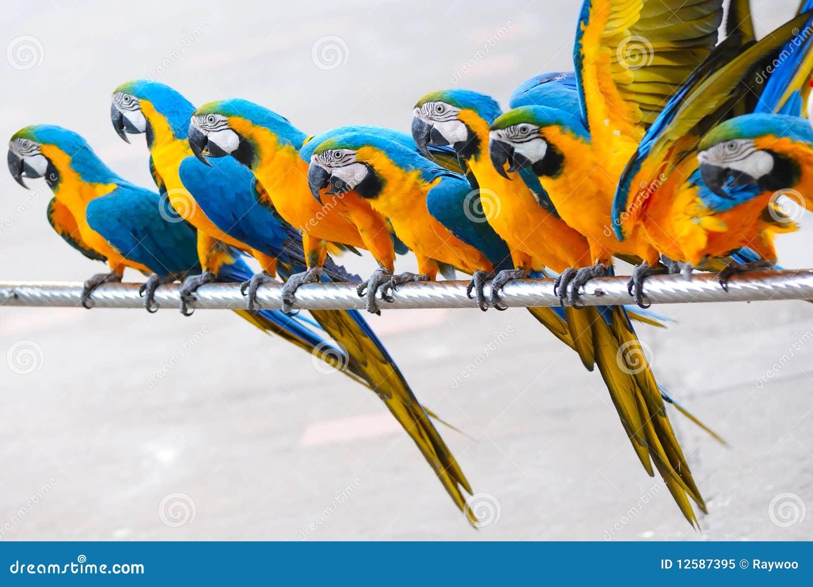 Pájaros del loro