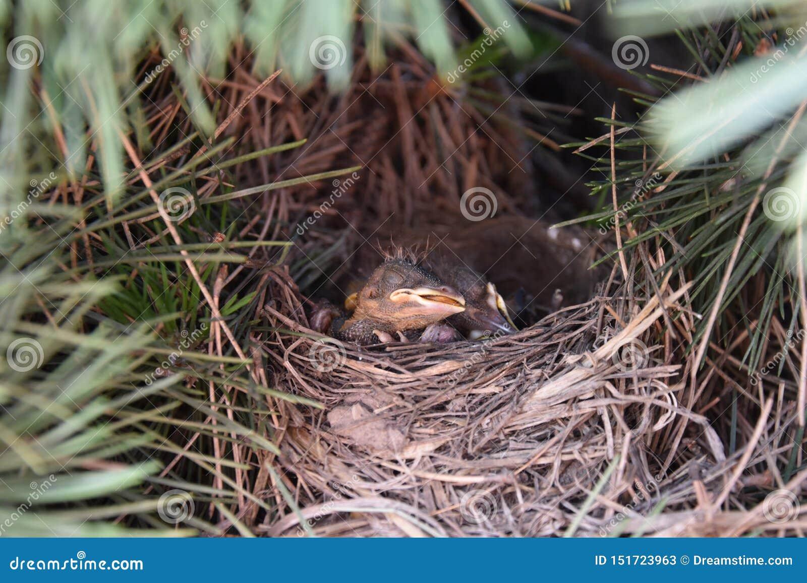 Pájaros el dormir
