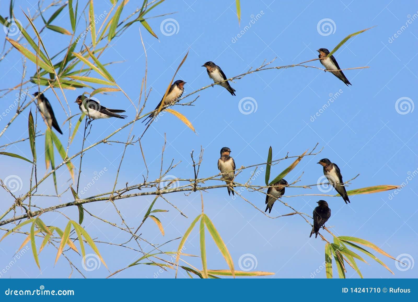 Pájaros en bambú