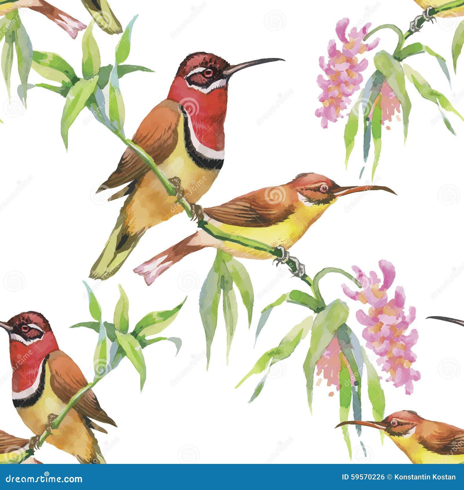Pájaros exóticos salvajes de la acuarela en modelo inconsútil de las flores en el fondo blanco