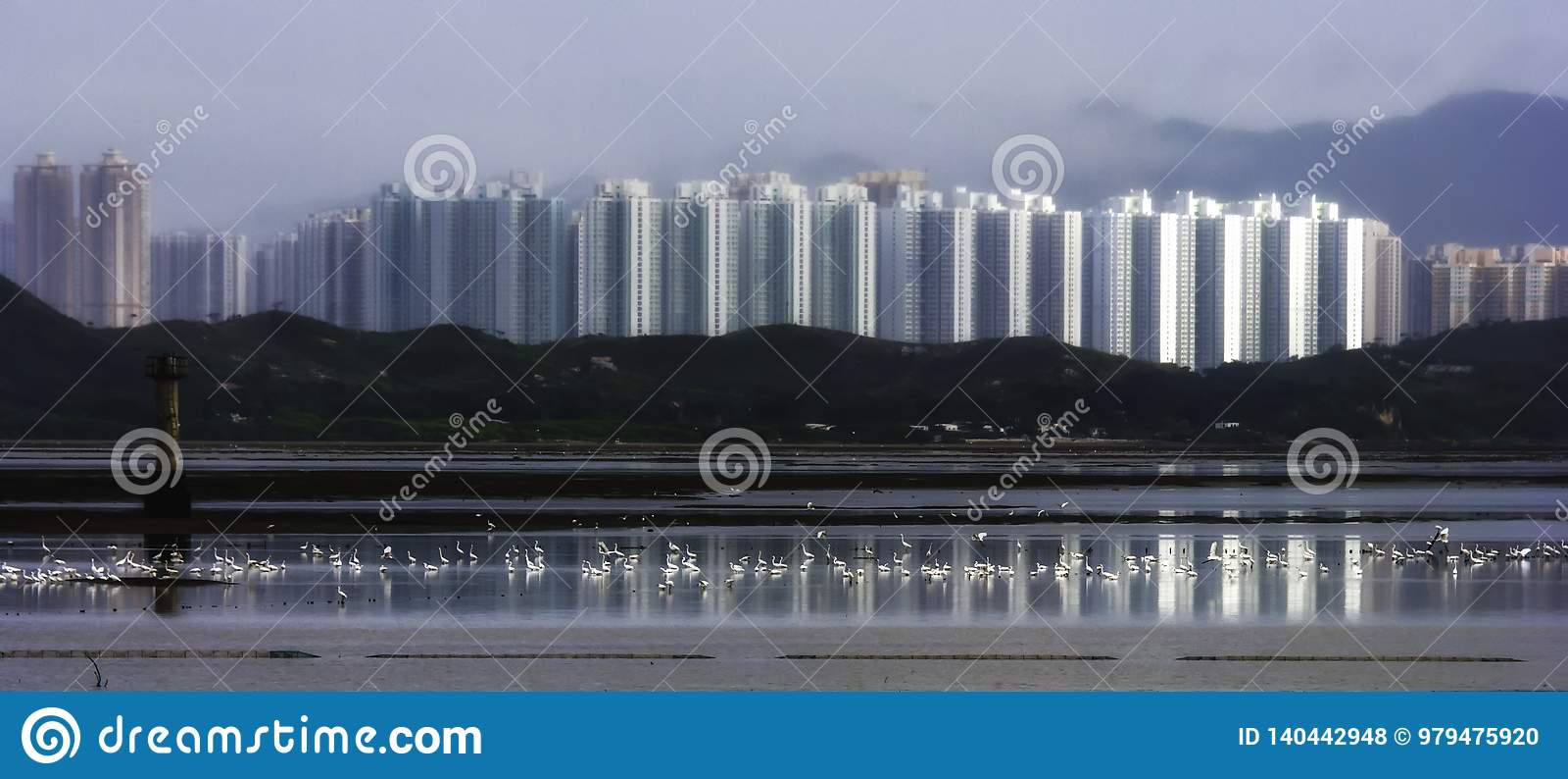 Pájaros, garcetas en el agua en el mar con la reflexión de la casa