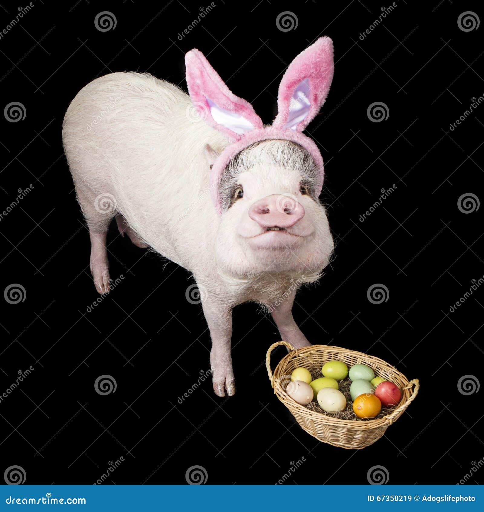 Páscoa engraçada Bunny With Basket do porco